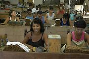 Arbeiter und Arbeiterinnen in einer kleinen Zigarren-Fabrik im kubanischen Trinidad