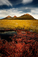 Richard Furhoff 90101_Tassie__DSC7817.tif.Red Pond Weed and Granite Hills, Lyell Highway, South West Tasmania..