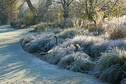 Low sunlight highlighting the grasses border on a frosty morning in winter. Bronze swan sculptures. Grasses include Stipa tenuissima, Stipa arundinacea, Carex testacea, Calamagrostis x acutiflora 'Karl Foerster' and Pennisetum alopecuroides 'Hameln'. Design: John Massey, Ashwood Nurseries
