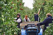 Nederland, Leuth, 12-9-2017 Poolse arbeiders, vrouwen, plukkers, halen de Elstar appels van de bomen in een boomgaard. Ondanks de vorstperiode begin van het jaar is de oogst hier heel goed. De teler en zijn vrouw hebben rond Pasen 5 nachten beregend om de bloesem te beschermen.Foto: Flip Franssen