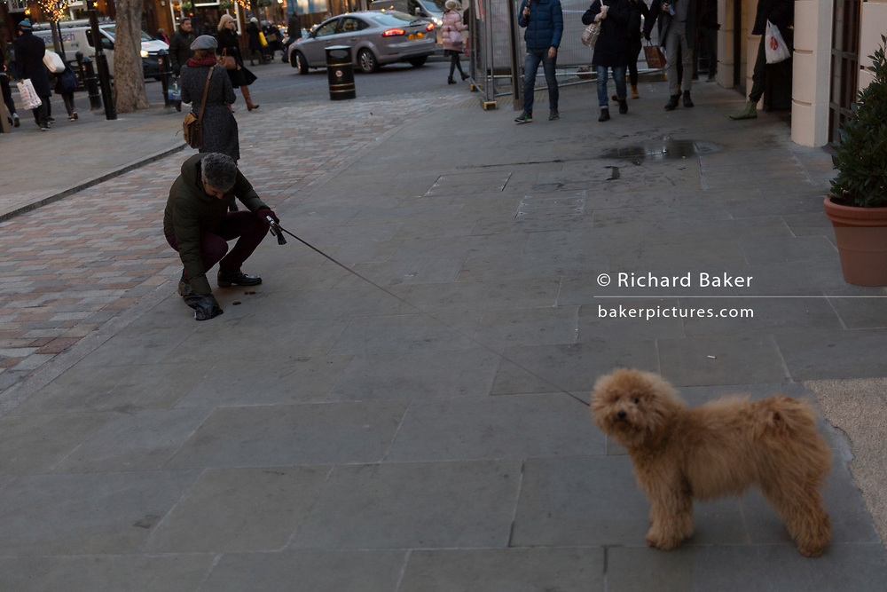 The owner of his pet Cockapoo dog picks up its 'poo' from the pavement in Seven Dials near Covent Garden, on 12th December 2017, in London England.