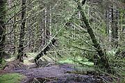 Fallen trees and peat near Loch Ochiltree, Southern Uplands, Scotland