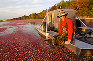 Kevin Ritter, 38 (Red shirt) working at Lee Brothers, Inc. (The Lee Brothers Farm) harvesting cranberries in Chatsworth, NJ, known locally as the capital of the Pinelands region..October 13 -14, 2008  .