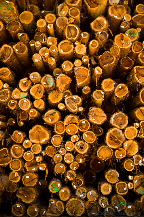 Log stockpiles of California Redwood are stored for future lumber product milling.