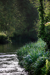 UK ENGLAND WILTSHIRE 26JUN08 - The river Kennet near Ramsbury in rural Wiltshire, western England...jre/Photo by Jiri Rezac..© Jiri Rezac 2008..Contact: +44 (0) 7050 110 417.Mobile:  +44 (0) 7801 337 683.Office:  +44 (0) 20 8968 9635..Email:   jiri@jirirezac.com.Web:     www.jirirezac.com..© All images Jiri Rezac 2008 - All rights reserved.