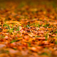 Leaves, prespective, autumn, fall