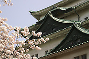Nagoya Castle  with Cherry blossoms (sakura) in the foreground.