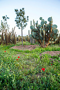 Cactus Thiemann - one of the largest cactus farm in Africa, Marrakech, Morocco, 2018–03-14.