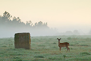Goshen, New York - Early morning fog on Sept. 14, 2014.