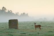 Goshen, New York - Early morning fog on Sept. 14, 2014.