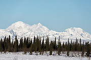 Denali in spring snow.