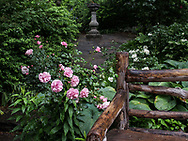 Roses and a rustic bench with a sundial in the background at Shakespeare Garden in Central Park,