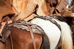 Vaqueiro na regiao do Agreste Pernambucano./Cowboy in Northeas, agreste Pernambuco.Ano 2010.Foto Adri Felden/Argosfoto