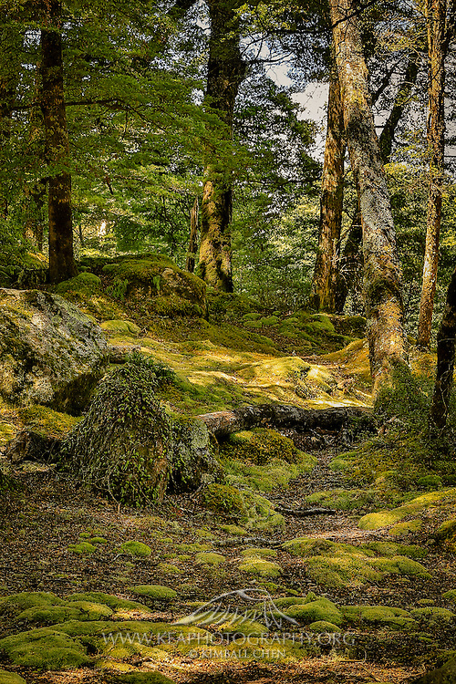 Lush green forest in Manapouri, New Zealand