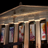 "John G. Shedd Aquarium in Chicago, Illinois at night with the ""jellies"" jellyfish exhibit. The Shedd Aquarium is located in the Museum Campus area of Chicago and is a popular attraction."