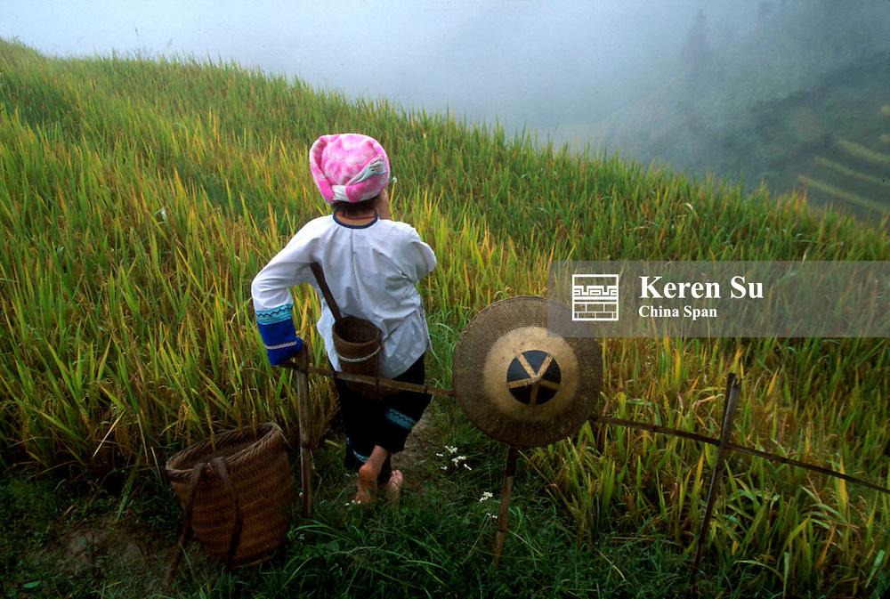 Zhuang girl with terraced rice paddy in the mountain, Longsheng, Guangxi Province, China