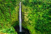 Akaka Falls, Akaka Falls State Park, Hamakua Coast, The Big Island, Hawaii USA