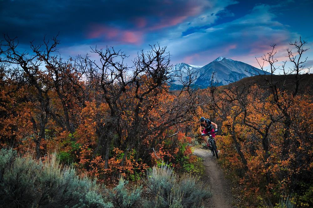 Sari Anderson rides through Gamble's Oak in Carbondale Colorado during peak autumn color.