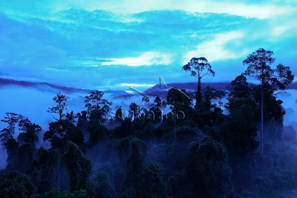 Dawn over forest in Maliau Basin, Sabah, Borneo, East Malaysia.