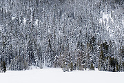 Trees rise up the slopes on the edge of Big Meadow, near South Lake Tahoe, CA.