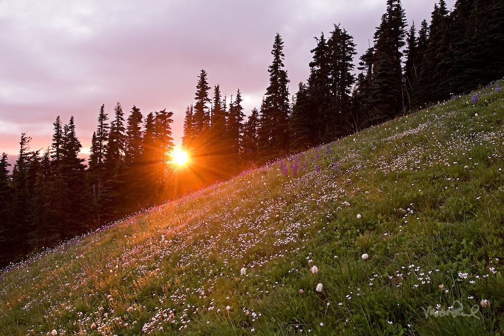 After a nice seafood dinner we rushed up Hurricane Ridge in Olympic National Park to capture the setting sun. The sun was quickly descending as we hiked through the firs that opened up to fields of wildflowers. I've never seen anything like it taking in the great expanse.