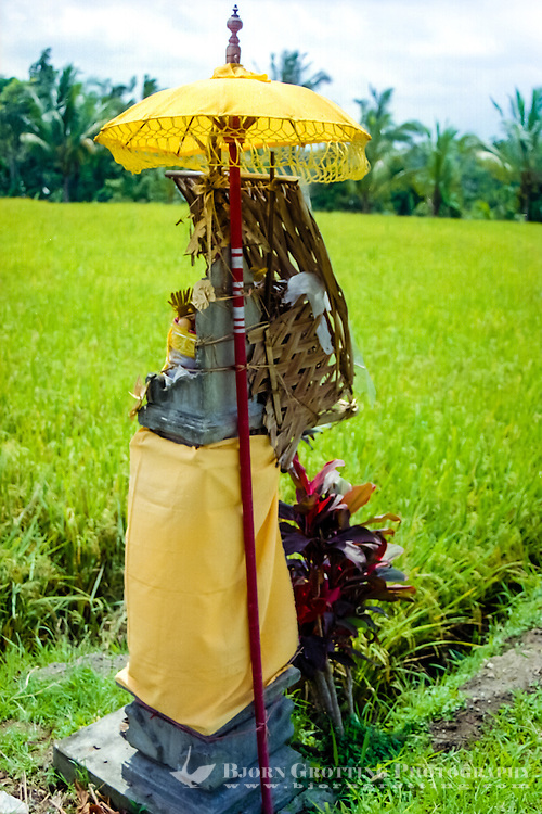 Bali, Badung, Perean. A small village south of Bedugul. Shrine on a rice field.