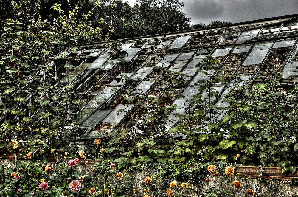 A decaying and overgrown greenhouse