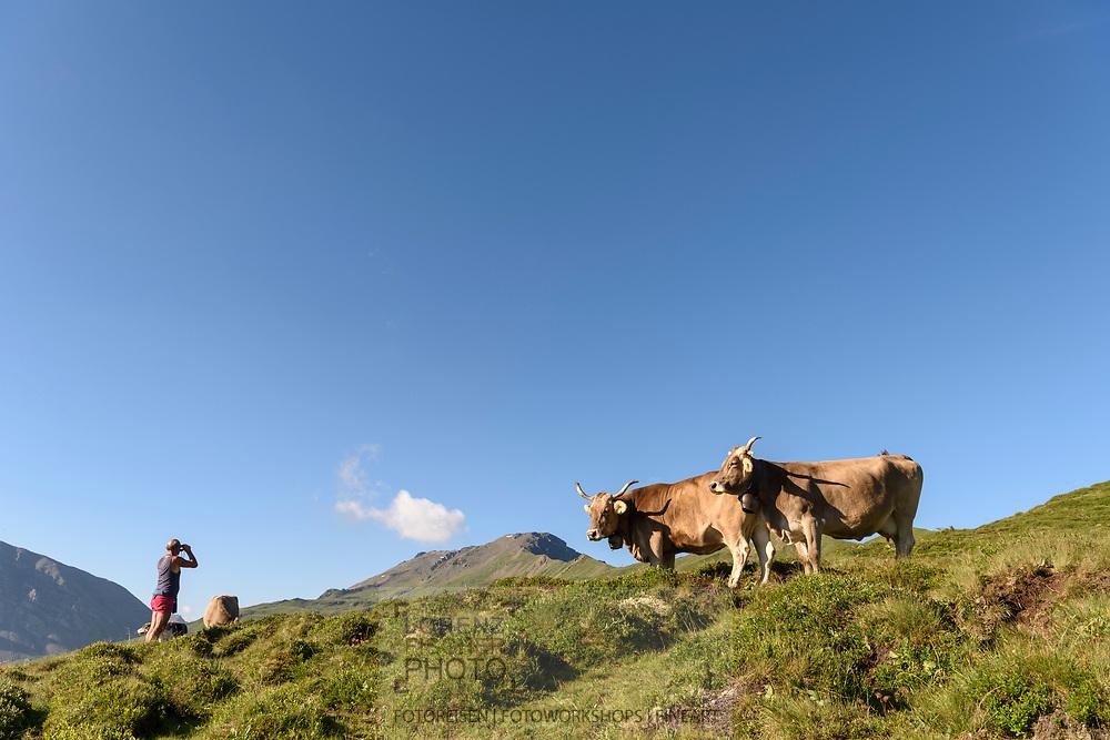 Der Hirt Helmuth H&ouml;del und Schweizer Braunvieh auf einer Kuhweide auf der Alp Stierva, Parc Ela, Graub&uuml;nden, Schweiz<br /> <br /> The shepard Helmuth H&ouml;del and Swiss Braunvieh on a cow pasture on the alp Stierva, Parc Ela, Grisons, Switzerland