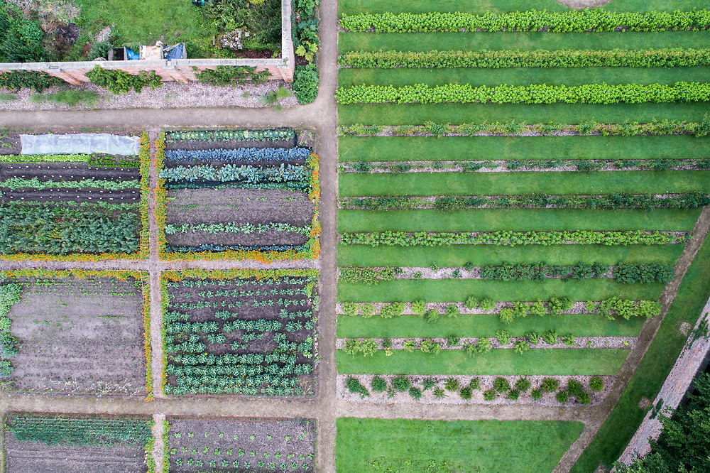 Overview of neatly planted garden rows, Richmond, Yorkshire, England