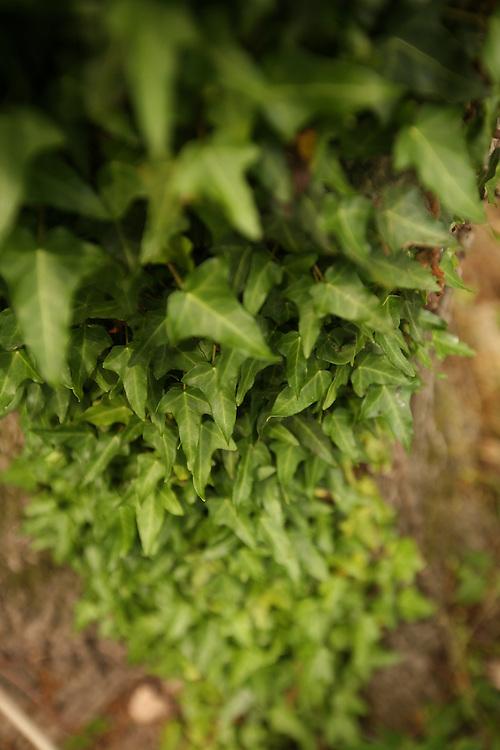 Pittsboro, NC - May 13: Danielle up-pots plants at the farm at Circle Acres. (Photo by Logan Mock-Bunting)