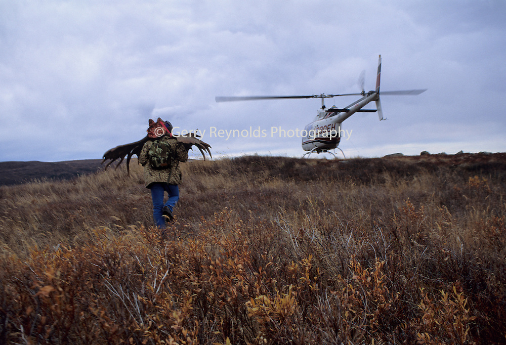 Moose, Moose Antlers, Poaching Case, Poaching, Poach, Poacher, Helicopter, Denali National Park, Alaska