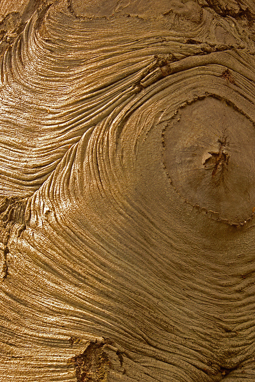 Aged tree ripples resemble human aging