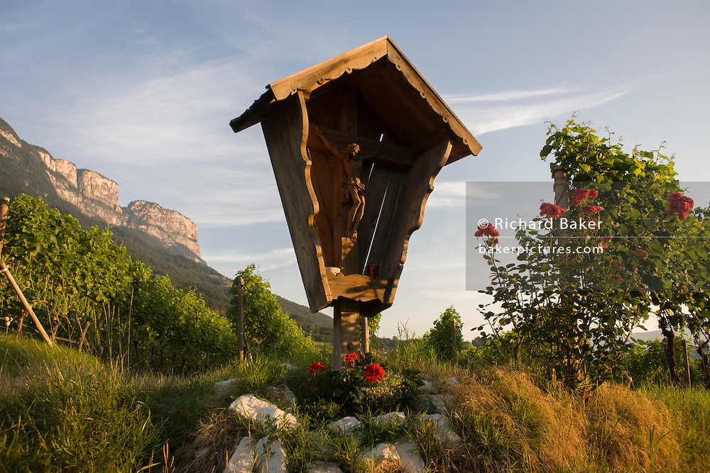 A Catholic crucifix and vineyard in the wine growing region south-west of Bolzano, South Tyrol, northern Italy.
