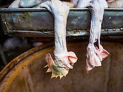 "12 JANUARY 2016 - BANGKOK, THAILAND: Recently killed chickens in the live poultry section of Khlong Toey Market (also spelled Khlong Toei) in Bangkok. On Monday the Thai Ministry of Public Health instructed government agencies to watch for any signs of ""bird flu"" during the winter season, and warned the public to avoid contact with any birds that appear sickly. The latest data from the World Health Organization showed the continuous transmission of avian flu in various countries, both in people and birds. Bird Flu is endemic in China, Vietnam and Indonesia, all important Thai trading partners. There have been no recorded outbreaks of Bird Flu in humans in Thailand several years.      PHOTO BY JACK KURTZ"