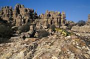 &lt;b&gt;EN&lt;/b&gt;. Eyed lizard (Timon lepidus) sunbasking on karstic rock. Torcal de Antequera Natural Park, Malaga province, Andalucia,  Spain.<br /> &lt;b&gt;ES&lt;/b&gt;. Lagarto ocelado (Timon lepidus) tomando el sol sobre roca k&aacute;srstica. Torcal de Antequera, M&aacute;laga, Andaluc&iacute;a, Espa&ntilde;a.