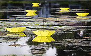 Yellow umbrellas float in the marsh surrounding Tenney Park during the Makeshift Festival at the Park in Madison, Wisconsin, Sunday, Aug. 12, 2018.