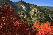 Snake River Canyon Fall Colors.. 2011 - Wyoming