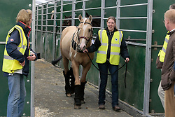 Peek a Boom of Cira Baeck<br /> Departure of the horses from Liege Airport to Lexington<br /> Alltech FEI World Equestrian Games - Kentucky 2010<br /> © Dirk Caremans