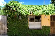 Vine covered house in Bauta, Artemisa, Cuba.