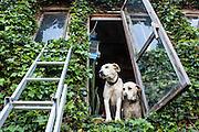 /EN/ The neighbours leave in harmony with the environment. /ES/ Los vecinos viven en harmonía con la naturaleza.