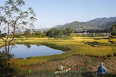 Nepal - Nepal Rice Harvest