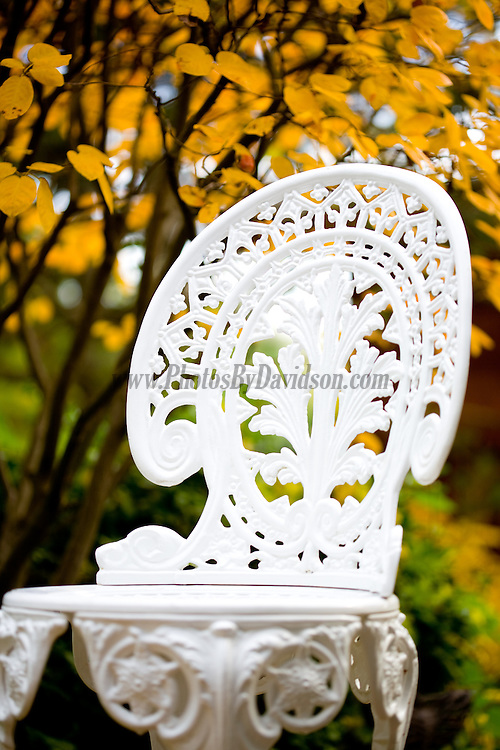 A white chair stands out in the fall colors.