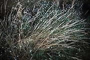 long wild grasses close up