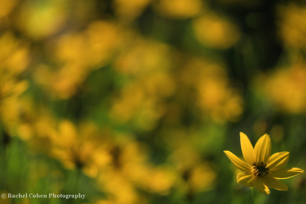 &quot;Illumination in Yellow&quot;<br />