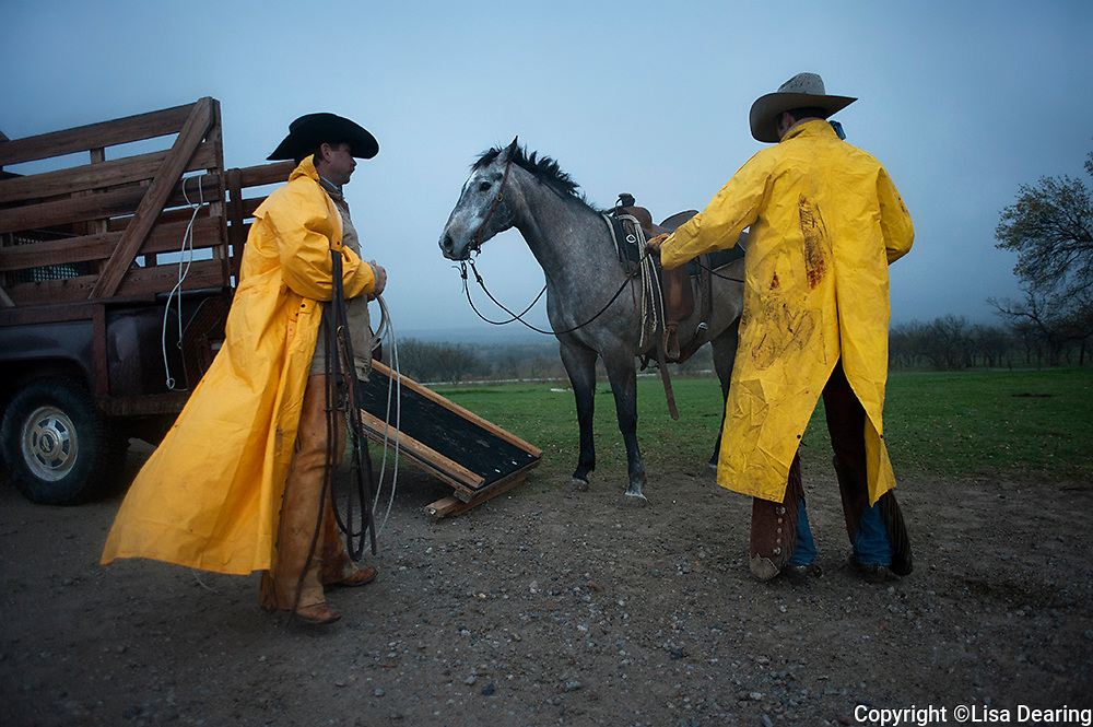 Loading Horse on Rainy Morning at the Twin V,<br /> Texas