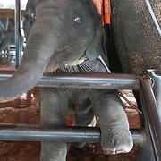 THA/Pattaya/20180722 - Vakantie Thailand 2018, baby olifant