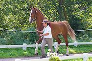 Ana Cristina Guerreiro, (POR), Adamastor Pabiola, Armani Pabiola, Millos, Xangai Pabiola, Zo Weg V - Horse Inspection Driving - Alltech FEI World Equestrian Games&trade; 2014 - Normandy, France.<br /> &copy; Hippo Foto Team - Leanjo de Koster<br /> 25/06/14