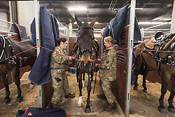February 6, 2018 - London, London, UK - London, UK. Members of The KIng's Troop Royal Horse Artillery prepare their horses in  temporary stables in Wellington Barrack. The KIng's Troop Royal Horse Artillery will ride with horses and gun carriages taking part in a 41 gun salute to mark the anniversary of the Accession of Her Majesty The Queen. (Credit Image: © Ray Tang/London News Pictures via ZUMA Wire)