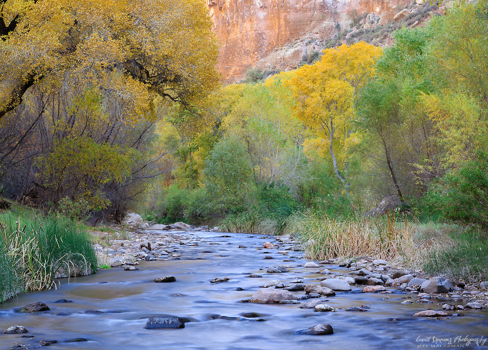 Fall color in Aravaipa Canyon