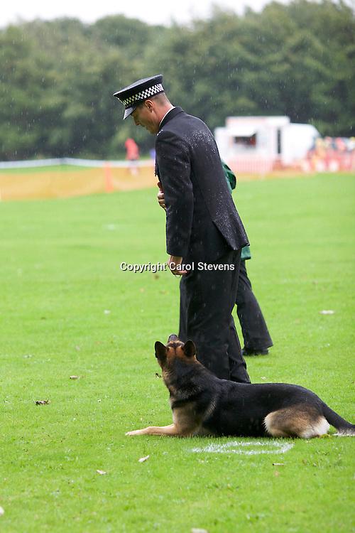 Fireside K9 Police Dog Trials September 2016  Temple Newsam, Leeds